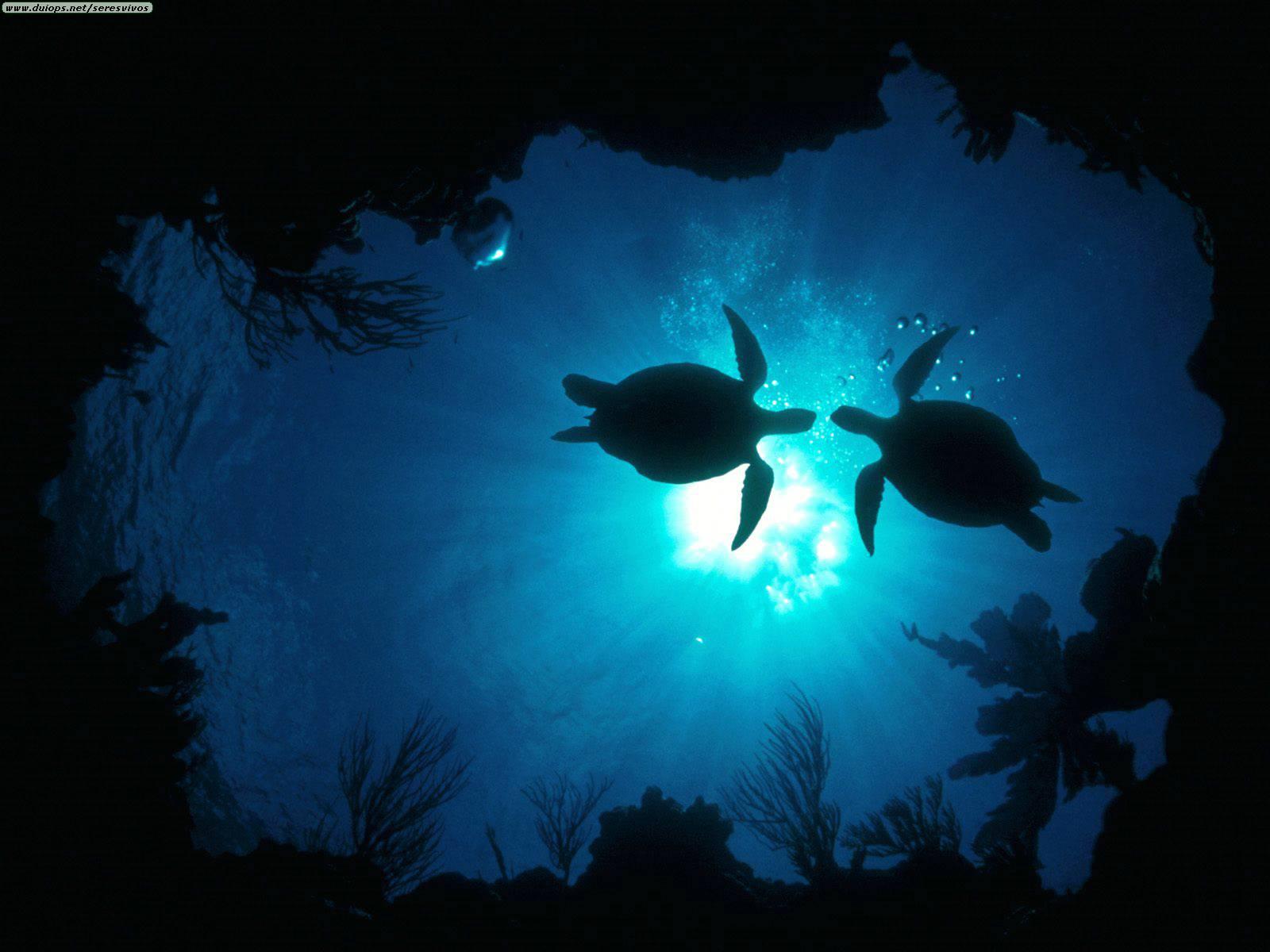 Unterwasser Video Projekt – 30 Jahre alt …